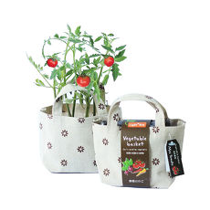 【Light+Bio】Vegetable basket小植栽五彩辣椒