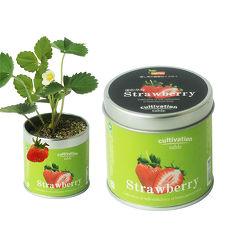 【Light+Bio】Cultivation Table栽培罐-迷你草莓