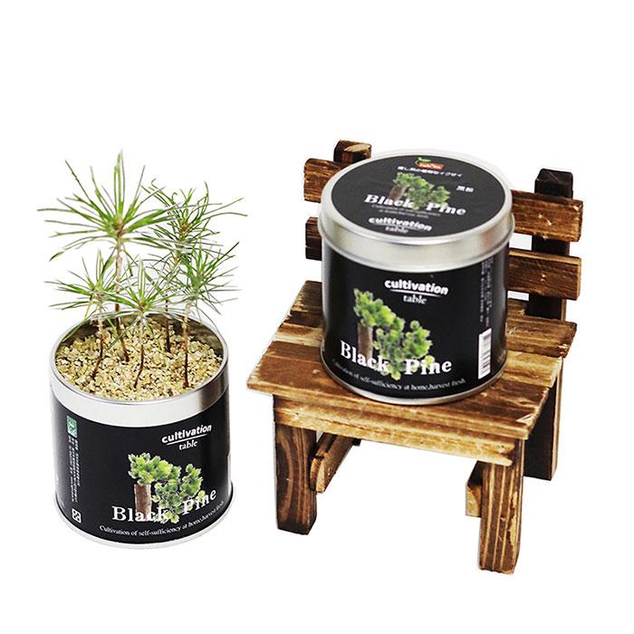 【Light+Bio】Cultivation Table栽培罐-黑松