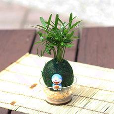 【Light+Bio】萌寵卡通綠苔球-叮噹